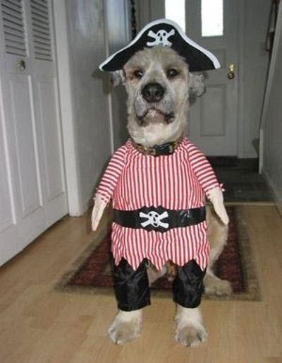 Пёс пират