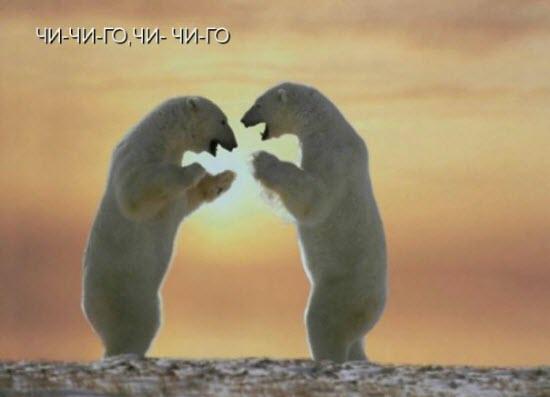 Медведи русские