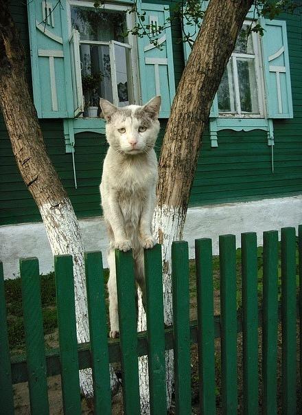 Кот - коренной житель России